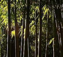 Bamboo Forest twilight by Rene Fuller