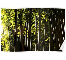 Bamboo Forest twilight Poster