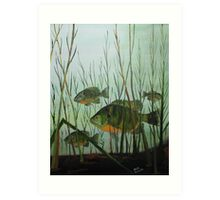 Stacked Blue Gills Art Print