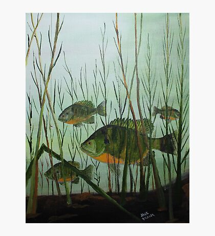 Stacked Blue Gills Photographic Print