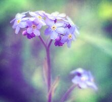 Forget-me-nots in a purple haze by Carina514