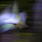 A vision of flight by Gili Orr