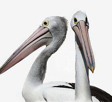 Pelican Mugshot by Tainia Finlay