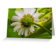 Daisies Never Die Greeting Card
