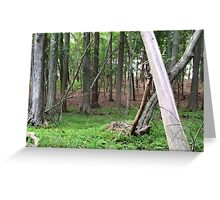 Naturescape 21 Greeting Card