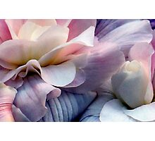 Just Takes Two...Beautiful Begonias Photographic Print