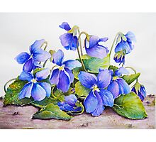 Big Violets (GMO Violets) Watercolour Painting Photographic Print