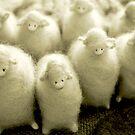 Woollies by Katarina Kuhar