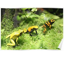 Frogs in nature Poster