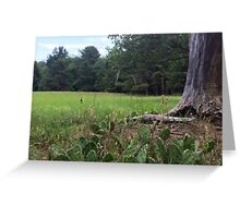 Naturescape 31 Greeting Card