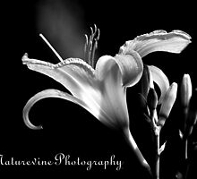 Lily of Our Valley II by naturevine