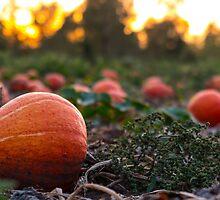 Orange Pumpkin Patch by Shaynelee