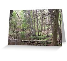 Naturescape 37  Greeting Card
