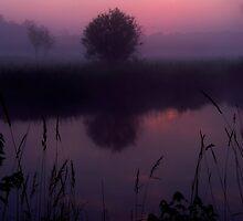 Breaking Purple by Robert  Mackert