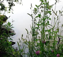 Grass on the banks of the Rideau River, Ottawa 2 by Shulie1