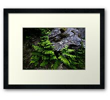 Rock and Ferns Framed Print