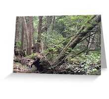 Naturescape 44 Greeting Card