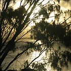Casuarina 3 by Cathy Martin