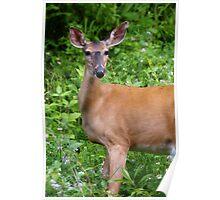 Oh Deer! Poster