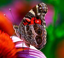 Kaleidoscope Colors by Brenda Burnett