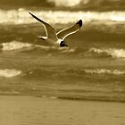 Sepia Seagull Scanning the Coast by Kent Nickell