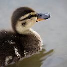 Baby Duck by ClickOfOdds