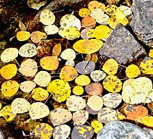 Aspen Leaves and Fall Colors in Colorado by Amy McDaniel
