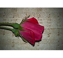 Love Songs Photographic Print