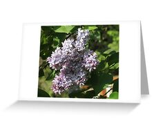 Lilacs.... Greeting Card