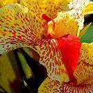 Orange and Orange by Lozzar Flowers & Art