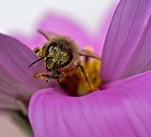 Pollen-ated by Barb Leopold