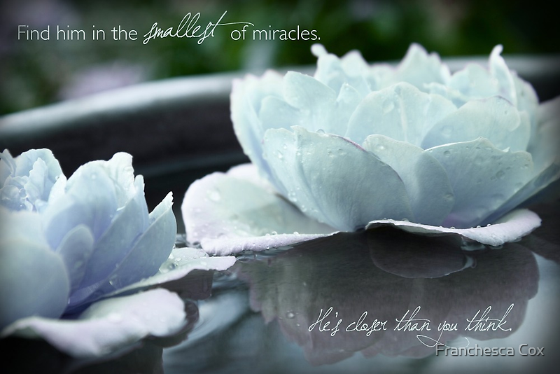 Find Him in the Smallest of Miracles by Franchesca Cox