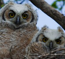 Outgrowing the Nest by Coniferous