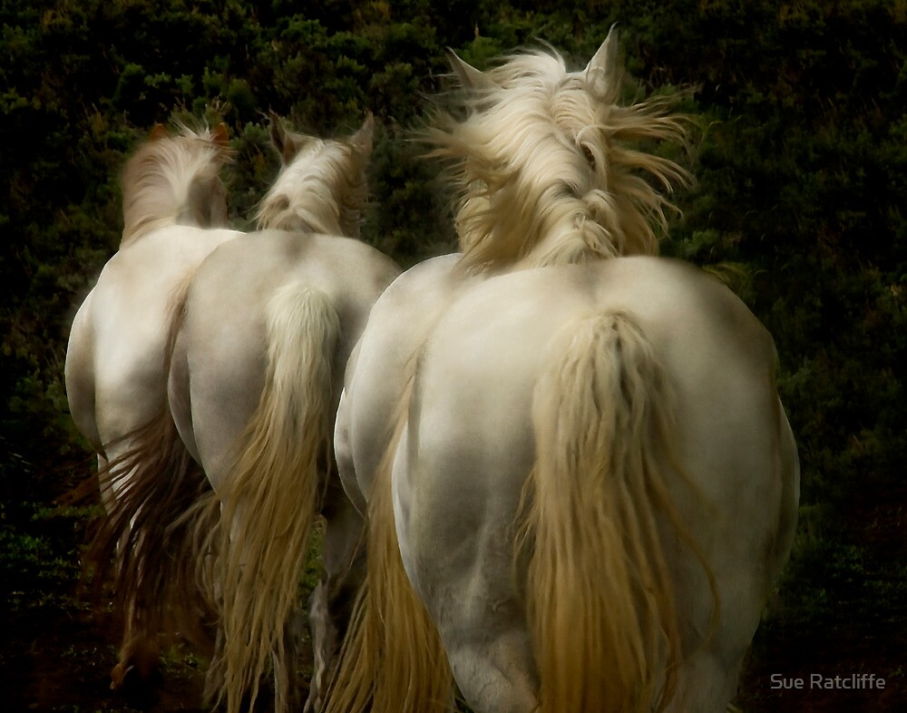 The White Horses of Absaroka by Sue Ratcliffe