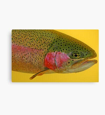 Western Oregon Rainbow Trout Canvas Print