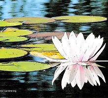 Floral Reflections by Caroline  Lembke