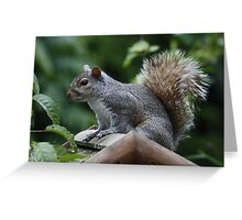 GREY SQUIRREL : Regular Visitor Greeting Card