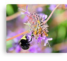 Sweet Garden Bumble Bee  •  Maxwell House Canvas Print