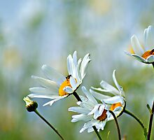 Daisies on the Hills by Gregoria  Gregoriou Crowe