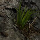 grass growing from a log by Daniel Sherwood
