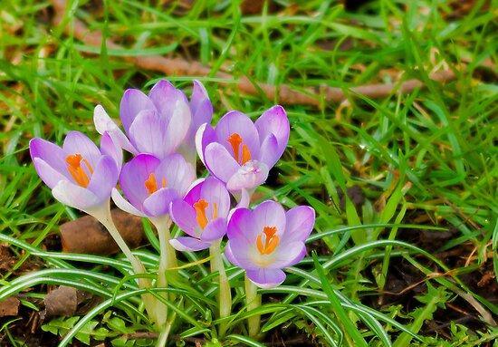 Spring Flowers by Trevor Kersley