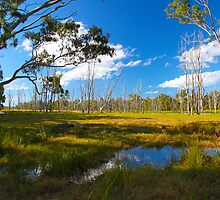 Australian Wetlands by Tracey Hawkes 'Visual Artist'