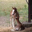 Gis' a Kiss! by Pamela Jayne Smith