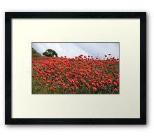 Field Of Red Framed Print