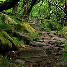 Padley Gorge 3 by Mike Topley