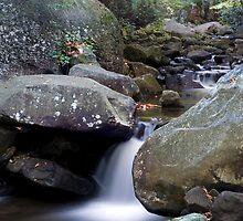 Jones Gap State Park  by PaulWilkinson