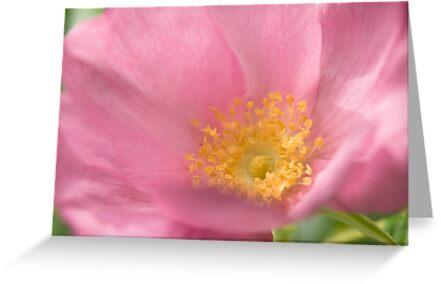 Summer flowers by laurabaker