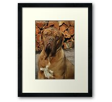 'Just look at me..not a wrinkle out of place.' Framed Print
