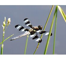 Magical Wee Dragon Photographic Print