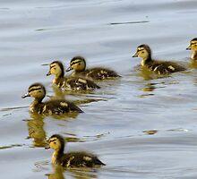 Baby Mallard Ducks by Tracy Faught